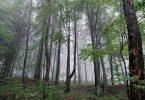 Manavgat'ta Sağanak Yağış Görünüyor